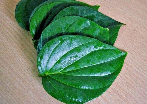 Vì sao dùng lá trầu không chữa trị tàn nhang