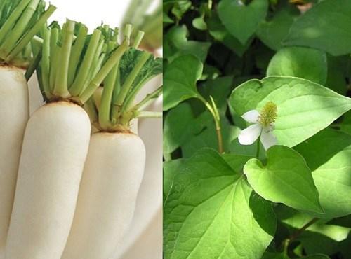 trị tàn nhang bằng củ cải trắng 5